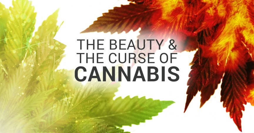 The beauty and curse of cannabis