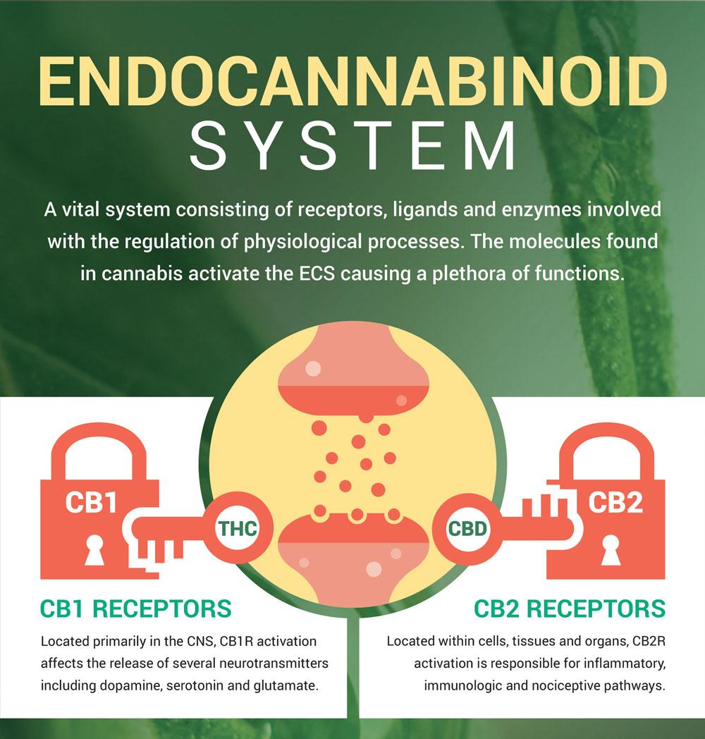 Endocanabanoid System