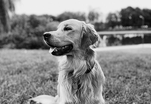 veterinary medicine is available at Hybrid Pharm in Ottawa Ontario